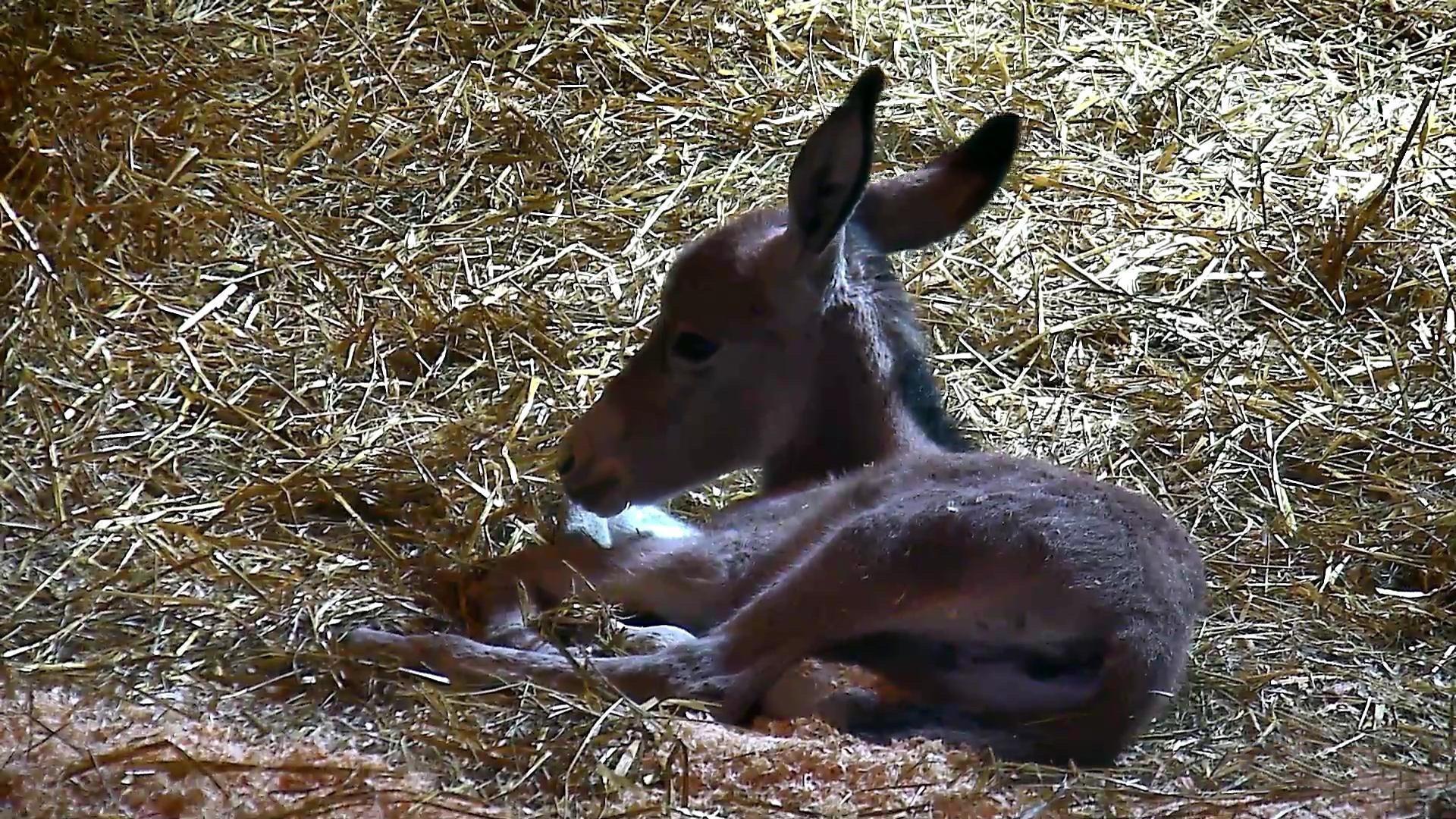 Donkey Cam - farm animals LIVE | Explore org