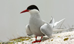 Best Viewing Hours5am - 9pm ET (until we add an infrared light source and then 24/7)