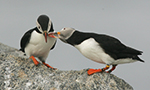 Best Viewing Hours5am - 9pm ET