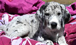 Best Viewing Hours24/7