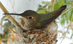Learn More & Get Involved