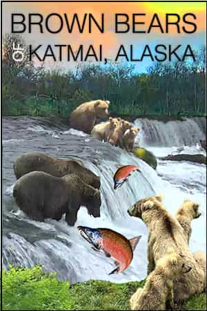 Live Bear Cam in Alaska - River Watch, Katmai National Park