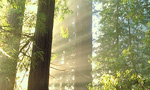 Best Viewing Hours7am - 6pm PT, and during live chat Q&A sessions