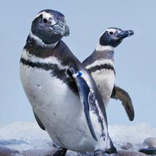 explore science live penguin cams