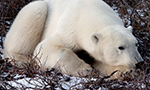 Best Viewing Hours7:30am - 4:30pm CT