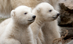 Best Viewing Hours11:00am - 6:00pm CST