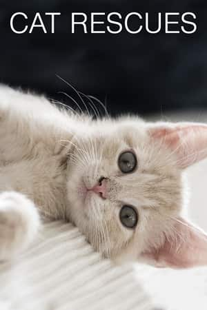 Kitten Rescue Cam - live video, pictures of cute kittens