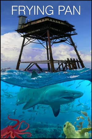 Shark Cam Live Underwater Webcam Of Sharks Explore Org