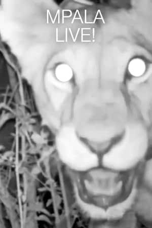 Lives cam