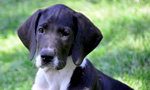 Best Viewing Hours7:00am - 5:30pm ET