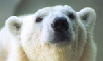 Best Viewing HoursWednesday through Sunday, 10am - 4pm CET