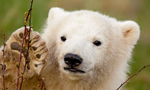 Best Viewing Hours8:00 am -10:00 am ET (2-4 pm CET)