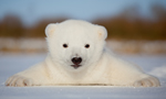 Best Viewing Hours8-10 am ET (2-4 pm CET)