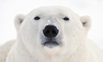 Best Viewing Hours9:30am - 4:00pm CT