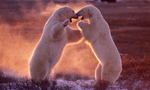 Best Viewing Hours8:00am - 4:00pm CT