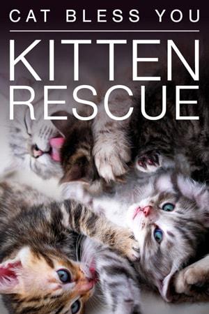 Live Kitten Cam - watch cute kittens playing | Explore.org