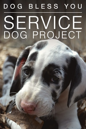 explore org service dog project Yummy treats and clever finds to keep your dog hydrated and nourished on your outdoor adventures.