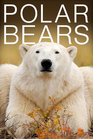 polar bear live stream camera wapusk national park