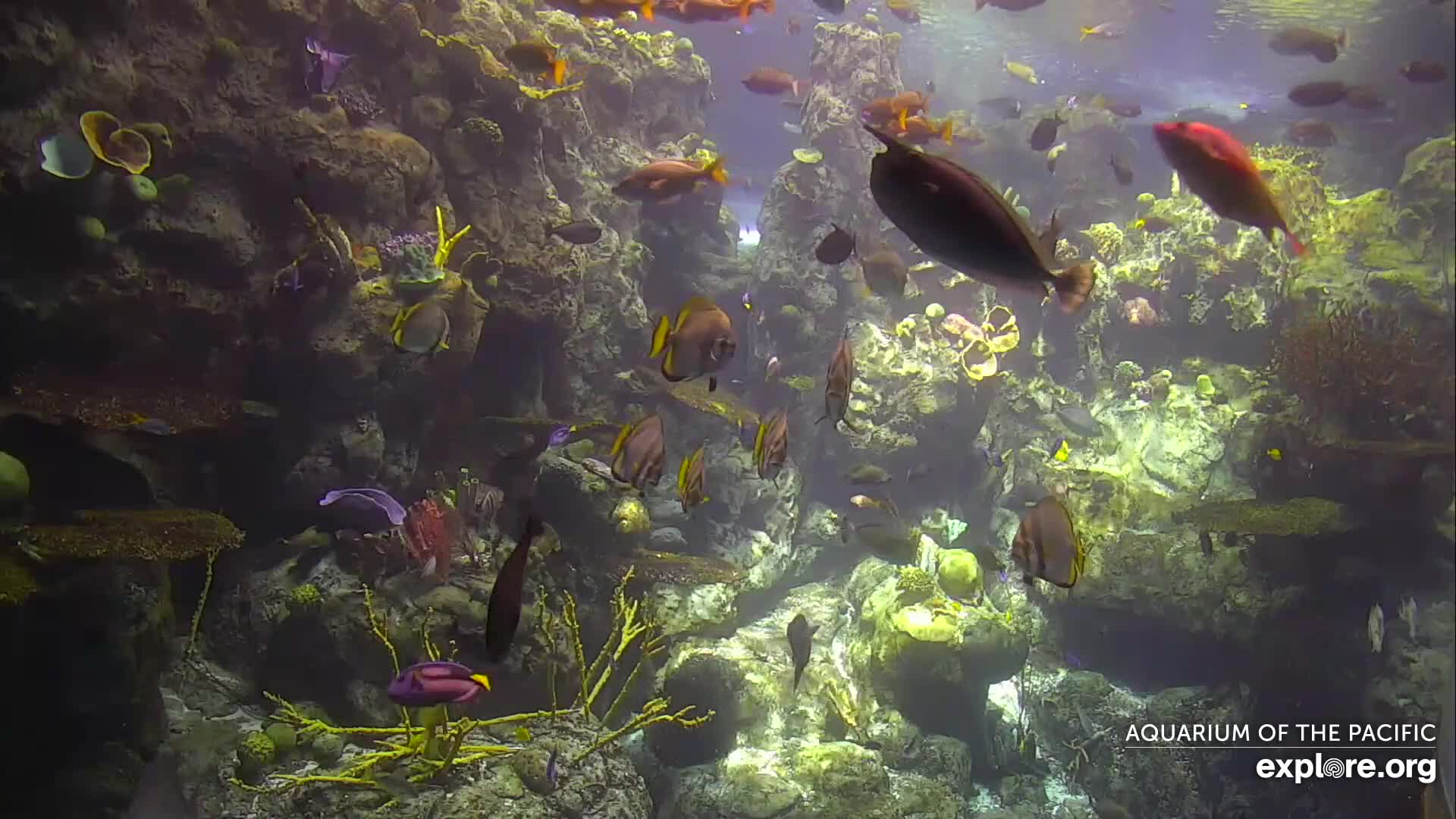 Long Beach, California Underwater Live Cam