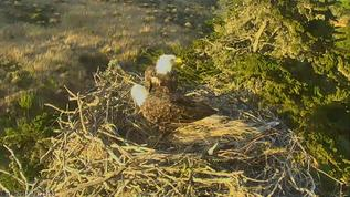 wow these 2 building nest or next year already or laying eggs  soon ??