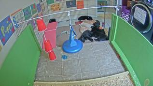 All nine pups sound asleep!
