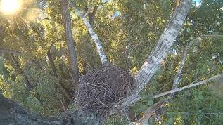 forlorn nest full of happy memories