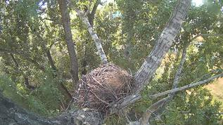 no owls in nest! sorry not as good as other pictures as i made