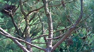little squirrel by nest