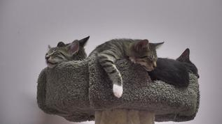 Ahhh, I see our 'Cat tree' is bursting with 'fruit' just ripe for the picking ?