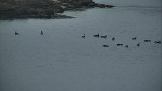 The Duck Parade 092017