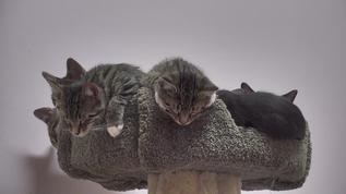 Ahhh, I see our 'Cat tree' is just bursting with 'fruit' just ripe for picking ?