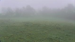 Cattle Pasture Panorama cam
