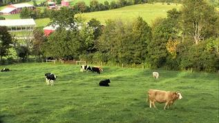 Cattle Pasture Panorama, Watkins Glen, NY