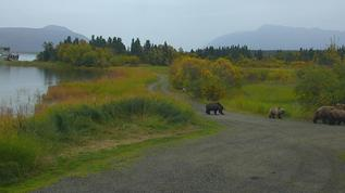 Grazer and cubs