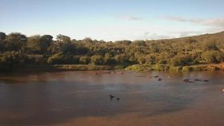 It looks to be that the Hippos are quite active lately :)