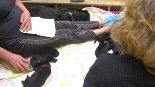 Puppies still on live cam tonight with pet sitters! 8:21 PM