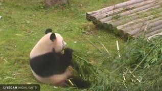 Mmmm... Bamboo!