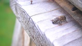 I like the bees.Layla