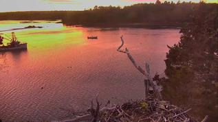 The beauty of HI, Maine sunset shines once again as we keep our hopes alive for Bailey.