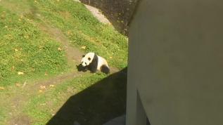 Wu Jun in the sun