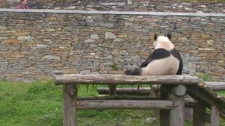 Hua Hu in his dumpling pose