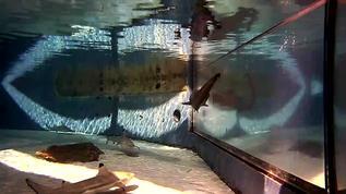 Oh i love sharks