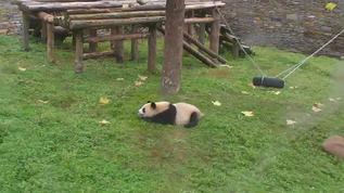 Ya Jun sleeps in her yard
