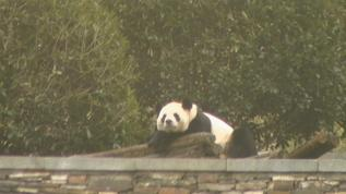 Xi Wang having a nap WG cam Yard B1
