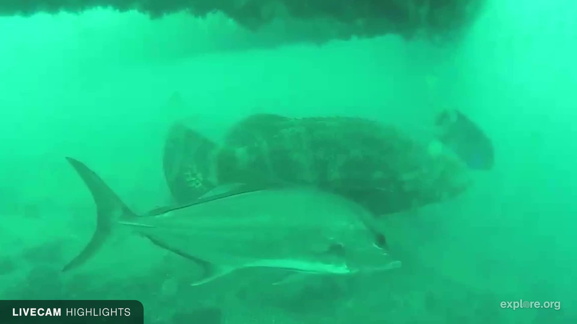 Sharks In The Atlantic Snapshots Explore Org
