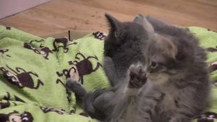 "Vin says ""woah, I have a foot"""