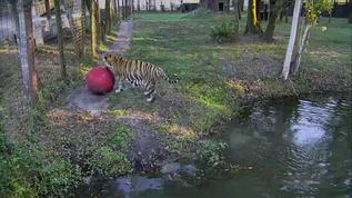 Should I toss this ball into the lake?