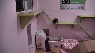 fantastic idea to use a box to keep the wall clean from kitty diarrhea because that wouldn't get anyone to play in the litter box more :)