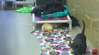now three pups with energy others sleepy