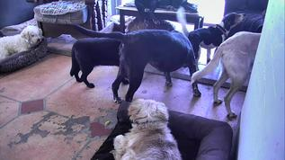 Good to see Sonny (beagle) spending some time with the gang